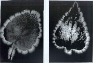 Kirlian photos