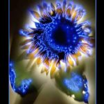 Kirlian Photo Gallery