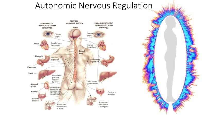 Autonomic Nervous Regulation